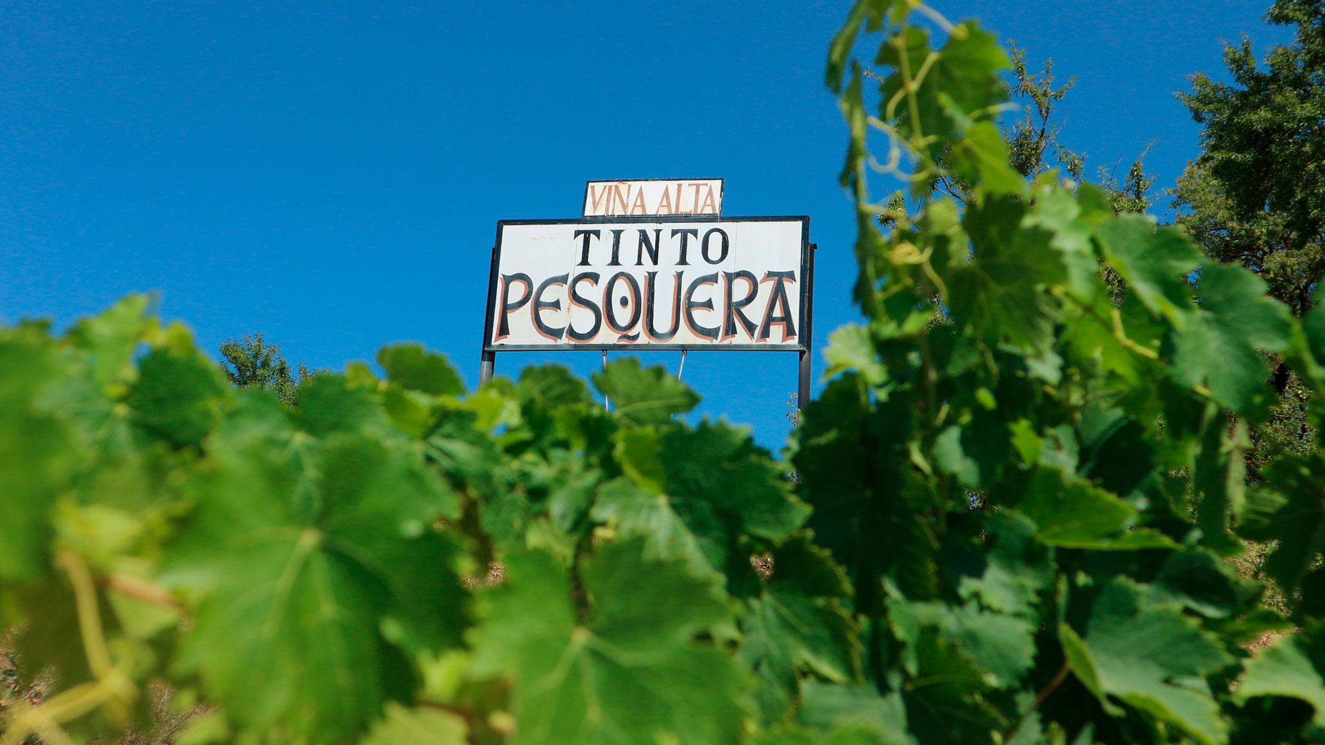 Nuevas añadas de Bodega Tinto Pesquera hero asset