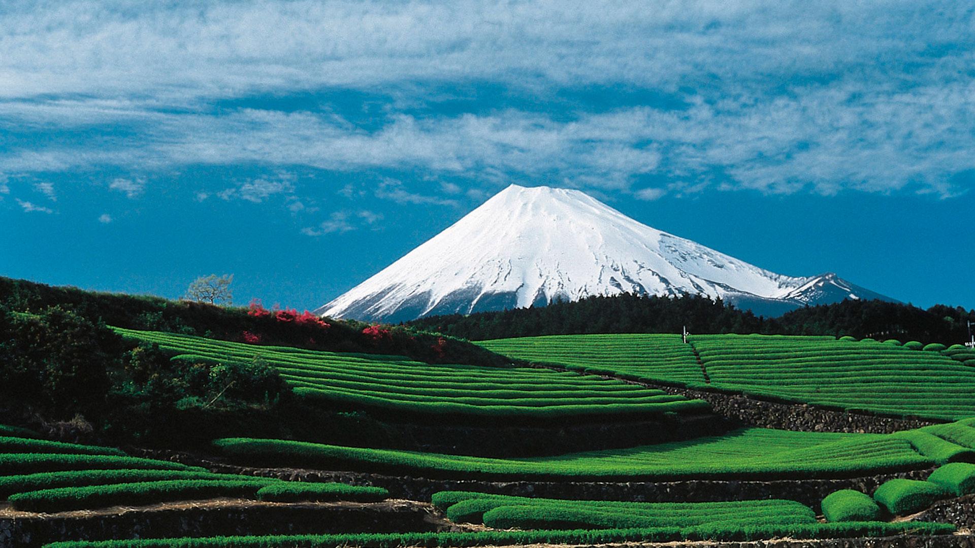 Visitar Japón sin salir de casa hero asset